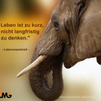 das-leben-ist-zu-kurz-elefant